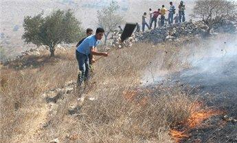 مستوطنون يحرقون محصول شعير شرق يطا