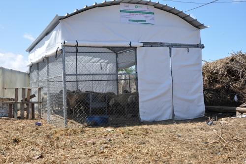 العمل الزراعي بغزة ينتهي من انشاء 166 حظيرة أغنام