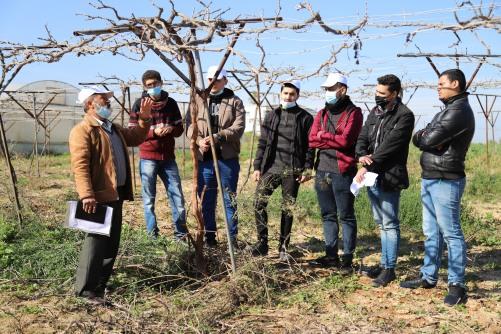 العمل الزراعي بغزة ينفذ تدريب عن عملية تقليم العنب بكلية الزراعة والبيئة