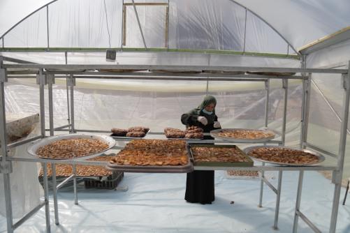 العمل الزراعي يعزز ويدعم السيدات منتجات العجوة في قطاع غزة
