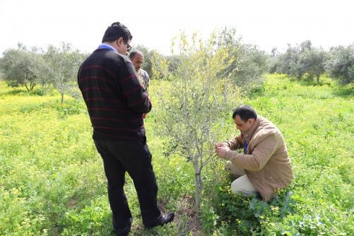 طاقم الارشاد والتدريب في العمل الزراعي ينفذ زيارات وقائية لمكافحة مرض
