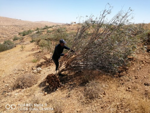 Israeli Occupation Forces Continue to destroy Palestine's Environment and Natural Resources