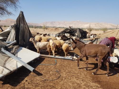 تقرير اعتداءات جيش الاحتلال ومستوطنيه على القطاع الزراعي الفلسطيني في الضفة الغربية وقطاع غزة  آب\2020