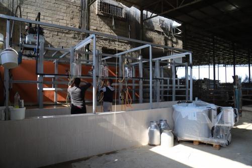 العمل الزراعي ينتهي من إعادة تأهيل وصيانة البنية التحتية ل 23 مزرعة ابقار حلوب في قطاع غزة