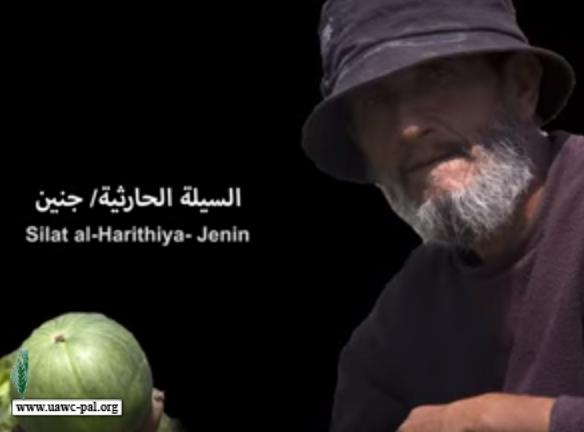 العمل الزراعي في الميدان: السيلة الحارثية - جنين
