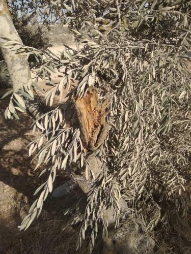 تقرير اعتداءات جيش الاحتلال ومستوطنيه على القطاع الزراعي الفلسطيني في الضفة الغربية وقطاع غزة تشرين الثاني\2020