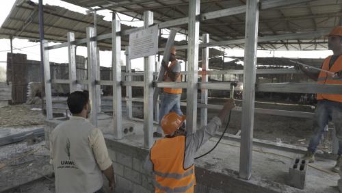 العمل الزراعي يبدأ بتأهيل وتطوير 25 مزرعة أبقار حلوب في قطاع غزة