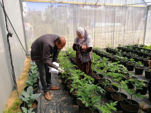 العمل الزراعي يقدم الارشادات اللازمة للمستفيدات من مشروع الحدائق المنزلية