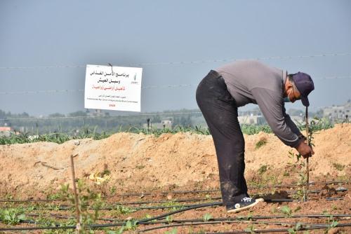 العمل الزراعي يعيد تأهيل وزراعة 150 دونم شرق غزة