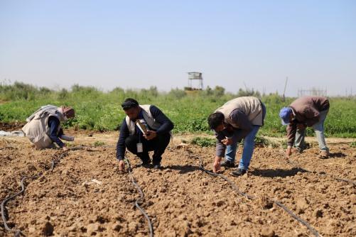 العمل الزراعي يعيد الحياة ل 50 دونم من الأراضي التي اغرقها الاحتلال شرق غزة