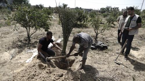 العمل الزراعي يدعو لإنقاذ ودعم صغار منتجي التمور في الأغوار الفلسطينية