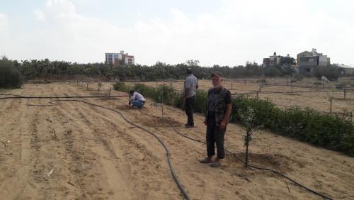 العمل الزراعي بغزة ينتهي من استصلاح وزراعة 24 دونم زراعي شرق خان يونس