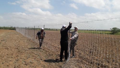 العمل الزراعي ينتهي من استصلاح 50 دونم زراعي شرق غزة