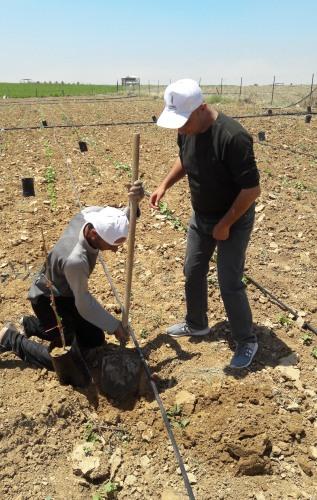 العمل الزراعي بغزة ينتهي من استصلاح 26 دونم زراعي للأراضي المدمرة شرق غزة