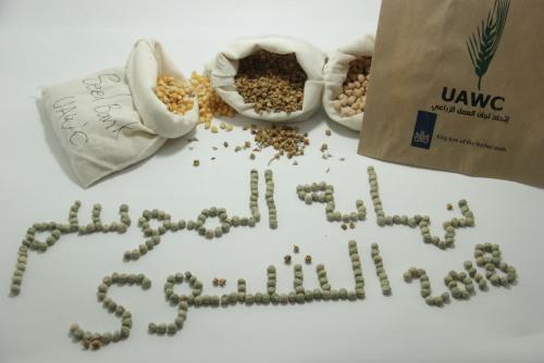 بنك البذور البلدية يختتم توزيع البذور للموسم الشتوي