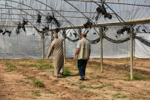العمل الزراعي يقوم بإعادة تأهيل 35 دونم من الدفيئات الزراعية في وادي السلقا