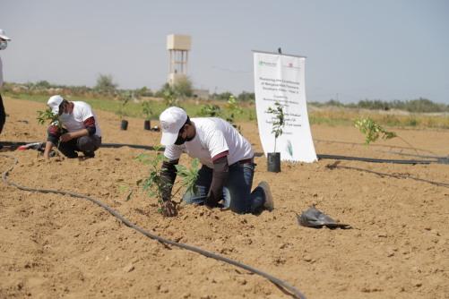 العمل الزراعي يقوم بإعادة تأهيل وزراعة 320 دونم في المناطق الشرقية لجنوب قطاع غزة