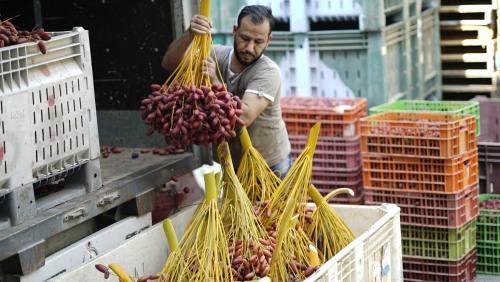 العمل الزراعي بغزة يعزز القدرات التسويقية لجمعية خان يونس الزراعية التعاونية