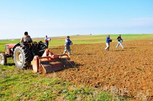 بيان صادر عن اتحاد لجان العمل الزراعي  بمناسبة يوم الأرض
