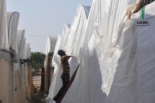 العمل الزراعي بغزة يبدأ بتأهيل 57 دفيئة زراعية في المحافظة الوسطى
