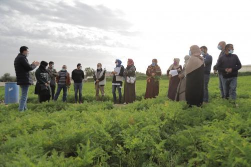 العمل الزراعي ينفذ زيارات تبادلية بين مزارعات ومزارعي الجزر في قطاع غزة