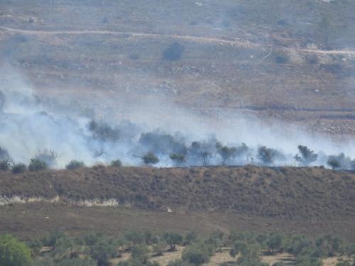 تقرير اعتداءات جيش الاحتلال ومستوطنيه على القطاع الزراعي الفلسطيني في الضفة الغربية  تموز\2020