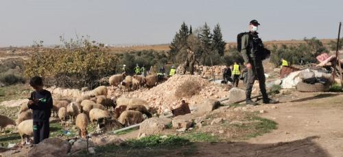 العمل الزراعي يرصد اقتلاع 1000 شجرة وعشرات الانتهاكات خلال كانون الأول