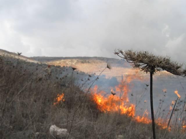 مستوطنون يضرمون النار في اراضي المزراعين في قرية بورين بنابلس اثناء حملة قطف الزيتون التي نظمها اتحاد لجان العمل الزراعي